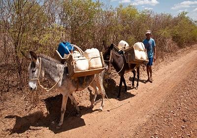Piauí terá quinto ano consecutivo de seca em 2015
