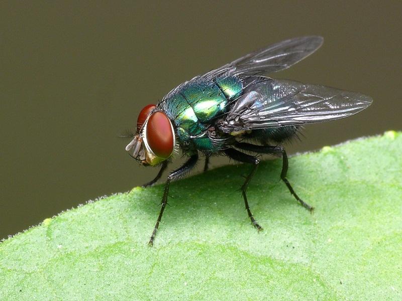 Saúde recomenda higienização para evitar doenças causadas pelas moscas