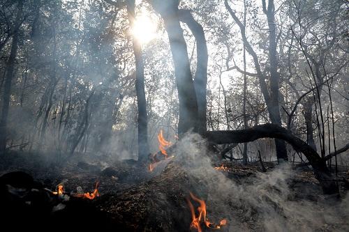 Governo proíbe queimadas por 60 dias em todo o país