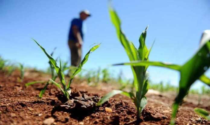 Ministério Da Agricultura negocia orçamento de R$ 1,5 bilhão para subvenção em 2021