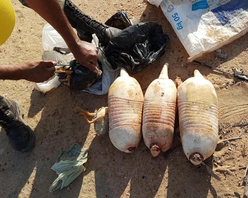 Comércio ilegal de carne de tatu virou prática rotineira no município