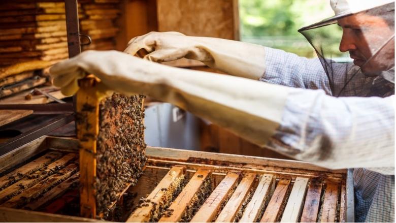 Seminário aborda potencialidades na apicultura em São João do Piauí